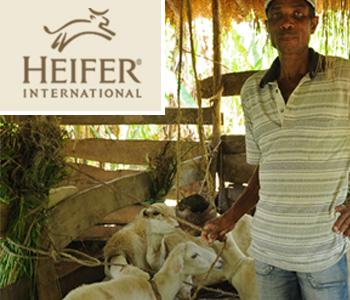 heifer-banner